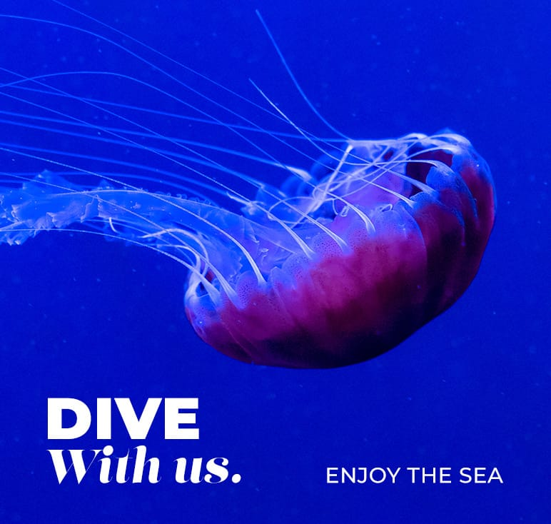 dive-with-us.jpg