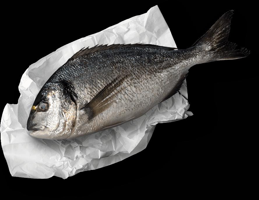 fish on paper