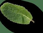 mint leaves 2a